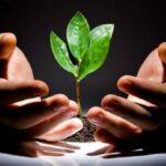 Стратегия инвестирования в молодые ПАММ-счета