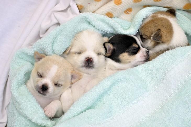 щенки спят