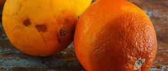 Гнилые апельсины