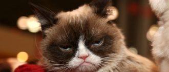 Нудный кот